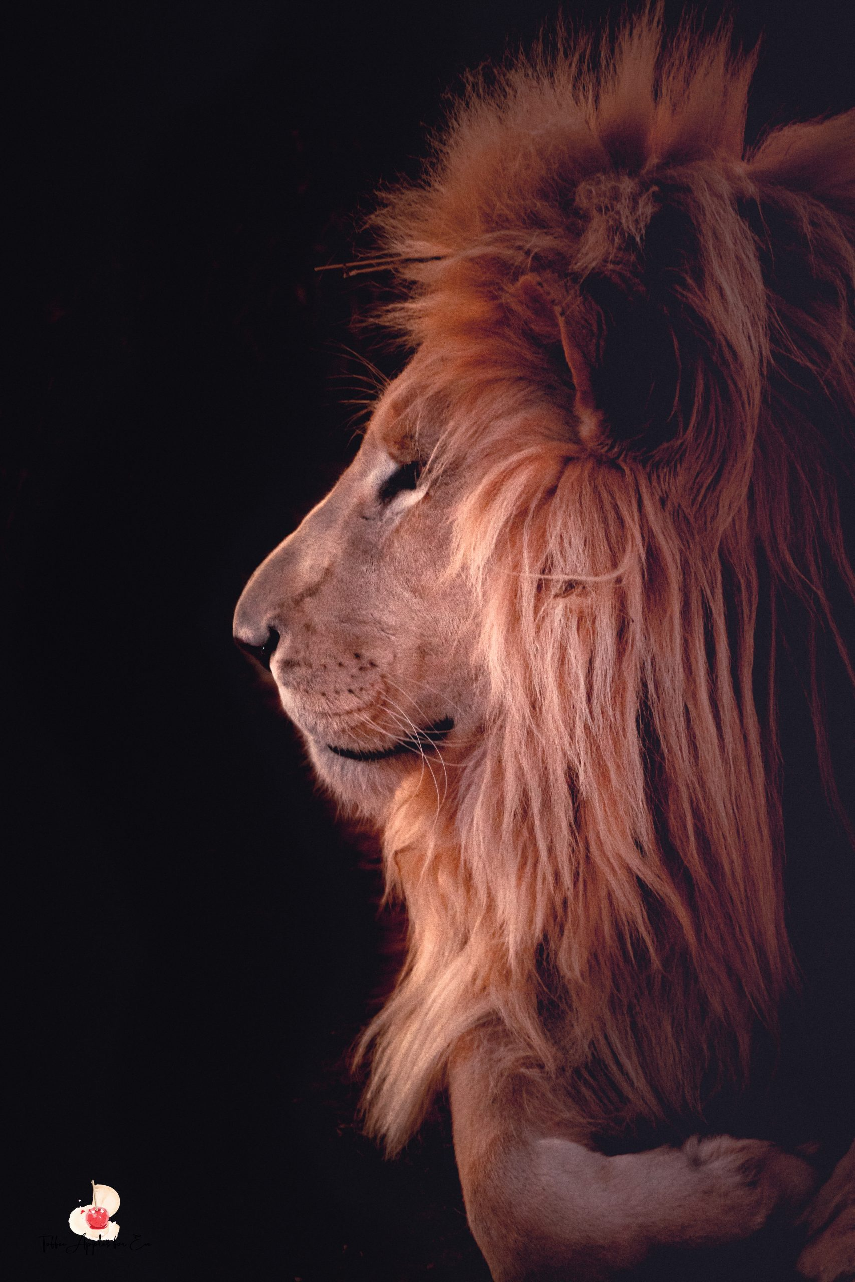 King of all kings - White lion